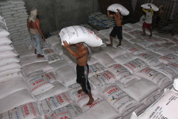 Sejumlah pekerja memindahkan pupuk urea ke salah satu gudang persediaan pupuk Desa Blang Sapek, Kecamatan Suka Makmur, Nagan Raya, Aceh, Selasa (23/4/2019). PT Pupuk Indonesia (Persero) menyiapkan pupuk bersubsidi sebanyak 8,87 juta ton untuk disalurkan dalam tahun 2019, angka tersebut berkurang 676 ribu ton jika dibanding tahun 2018 yang mencapai 9,55 juta ton. - ANTARA FOTO/Syifa Yulinnas