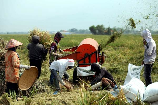 Alat pertanian sederhana berupa mesin perontok padi digunakan saat panen di areal persawahan Bojongsoang, Kabupaten Bandung, Jawa Barat, Kamis (18/10/2018). - JIBI/Rachman