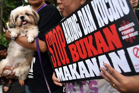 kampanye tolak konsumsi daging anjing dan kucing. - Antara