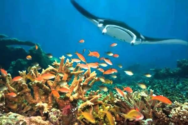 Keindahan bawah laut di Kepuluan Derawan Kalimantan Timur - Youtube