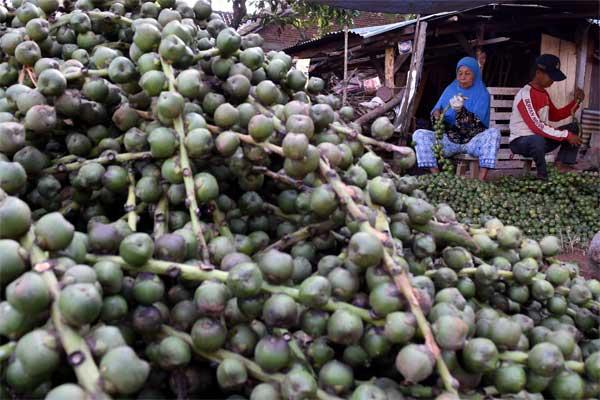 Pekerja menyortir buah aren untuk diolah menjadi kolang-kaling. - Antara/Aditya Pradana Putra