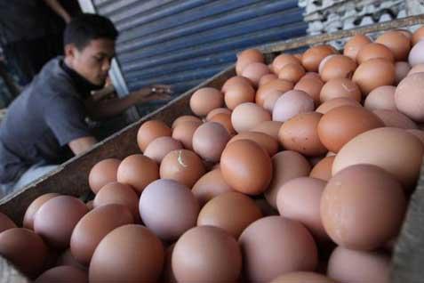 Ilustrasi: telur Ayam