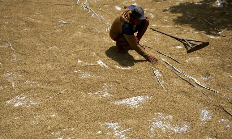 Petani menjemur gabah di Kampung Songkolo, Kecamatan Bontomarannu, Kabupaten Gowa, Sulawesi Selatan, Senin (9/3/2020). Harga gabah kering di tingkat petani di daerah tersebut mengalami penurunan, dari harga Rp4.800 per kilogram menjadi Rp4.200 per kilogram akibat musim hujan yang membuat butir padi tak berisi karena sebagian persawahan terendam air. ANTARA FOTO - Abriawan Abhe