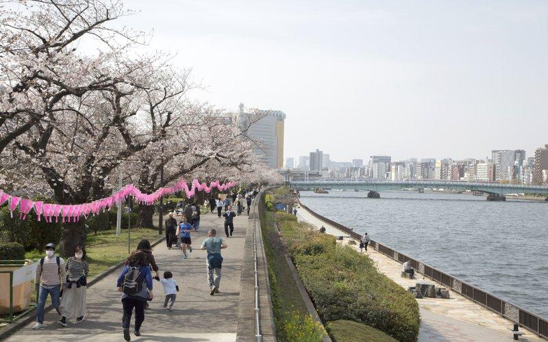 Pejalan kaki menikmati sakura yang bermekaran di tepi Sungai Sumida, Tokyo, Jepang -  Bloomberg/Loulou D\'Aki