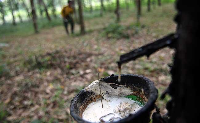 Ilustrai: Petani memanen getah karet di Palembang, Sumatera Selatan, Jumat (31/1/2020). ANTARA FOTO - Nova Wahyudi