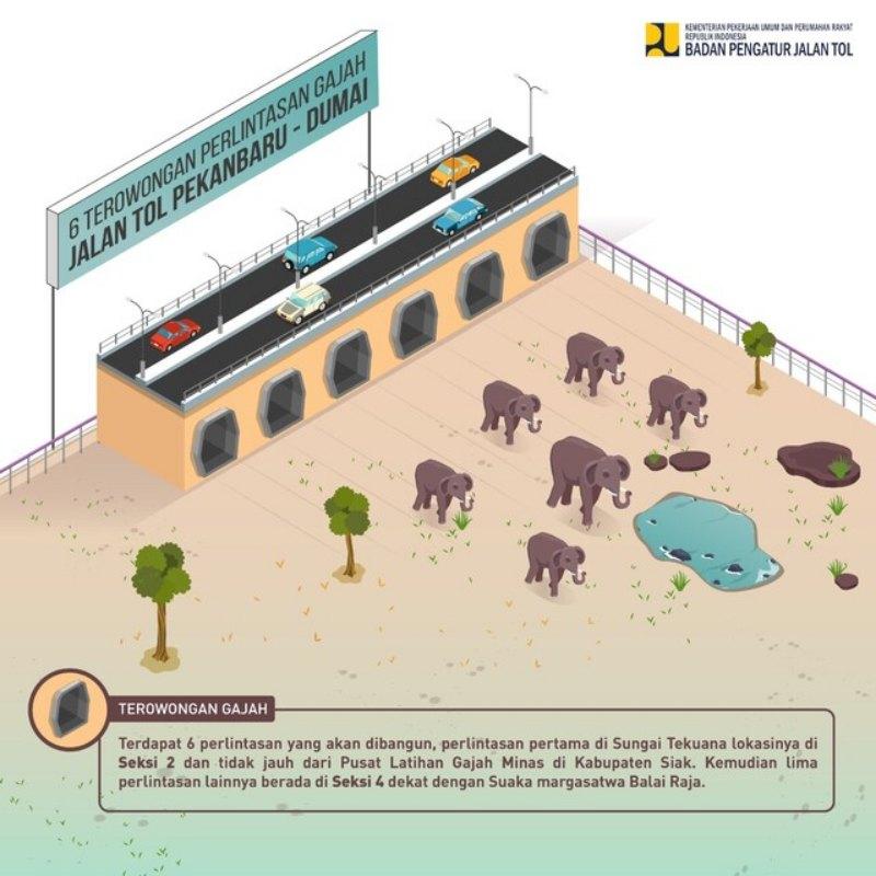 Ilustrasi terowongan perlintasan gajah di jalan tol Pekanbaru--Dumai. - Istimewa/BPJT