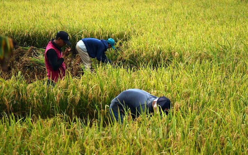 Ilustrasi petani memanen padi./Bisnis - Abdurachman