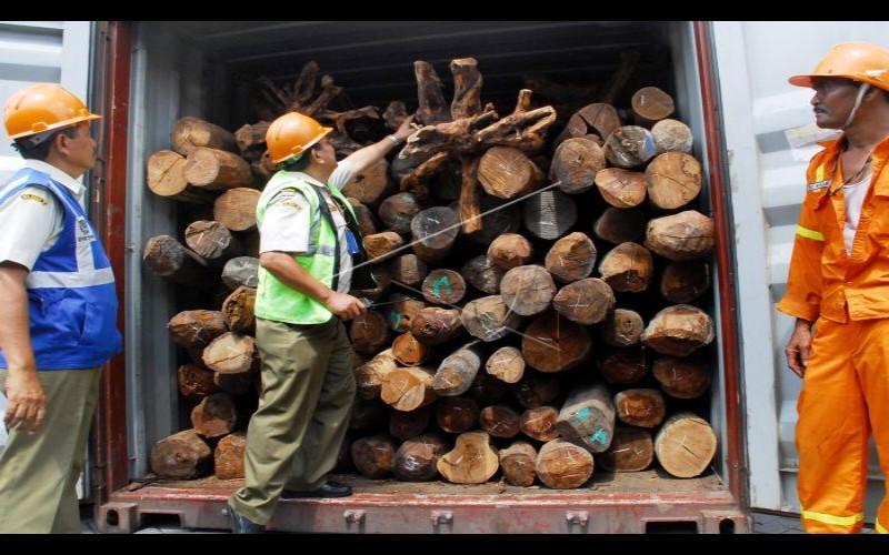 Ilustrasi - pemeriksaan spesifikasi kayu oleh Bea Cukai - FOTO ANTARA/Eric Ireng