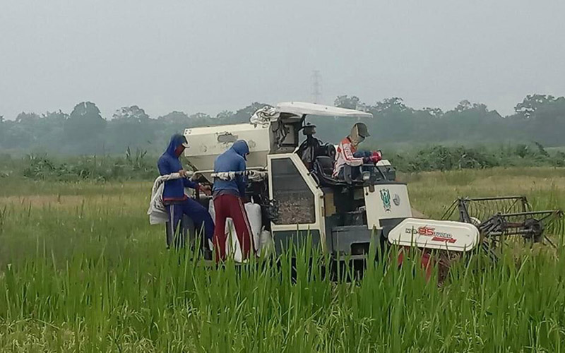 petani di Kabupaten Ogan Komering Ilir (OKI), Sumatra Selatan, memanen padi di sawahnya. istimewa