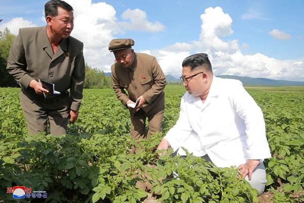 Pemimpin Korea Utara Kim Jong-un mengunjungi perkebunan Chunghung didampingi para stafnya, di Samjiyon, Korea Utara (10/7/2018). - Reuters/KCNA