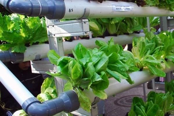 Pertanian hidroponik - Antara