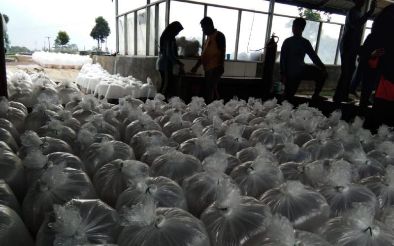 Benih ikan/udang itu didistribusikan ke pembudidaya ikan terdampak yang tersebar 67 kabupaten/Kota di berbagai wilayah di Indonesia.  - KKP