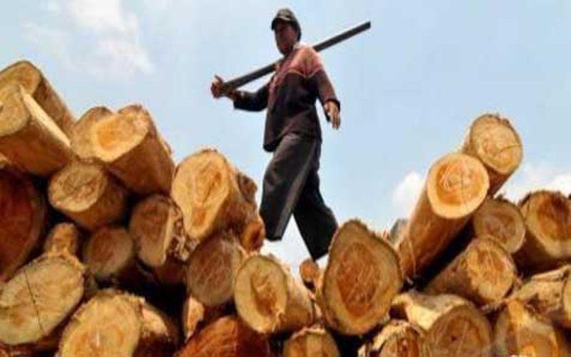 Produk kayu. - Antara