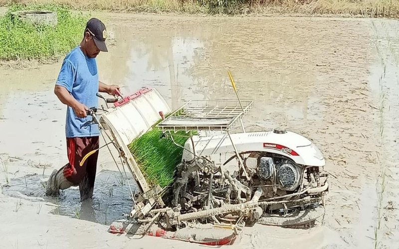 Petani di Kabupaten Ogan Komering Ilir, Sumatra Selatan, sedang memanen padi. istimewa