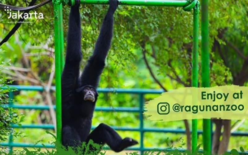 Taman Margasatwa Ragunan mengajak keluarga yang sedang melakukan berbagai aktivitas di rumah untuk mengikuti wisata virtual ke kebun binatang di Jakarta tersebut. - @ragunanzoo