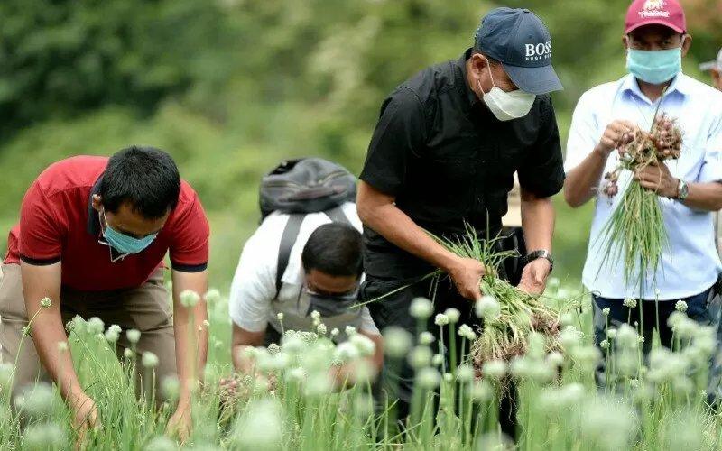 Gubernur Sumatera Utara Edy Rahmayadi (topi hitam) bersama petani memanen bawang merah di Desa Liang Pematang, Kecamatan STM Hulu, Kabupaten Deliserdang, Sabtu (2/5 - 2020). /ANTARA