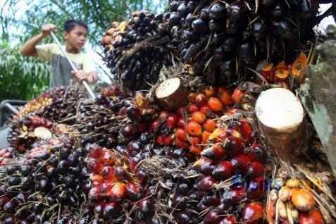 Petani sawit di Sumatra Selatan