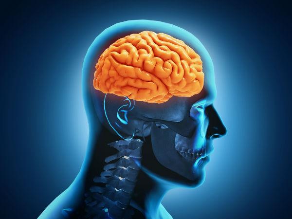 otak manusia. - boldsky.com