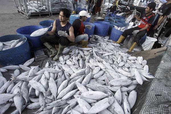 Pekerja memilah ikan untuk dipasarkan di Pelabuhan Muara Baru, Jakarta, Selasa (30/1). ANTARA FOTO - Muhammad Adimaja