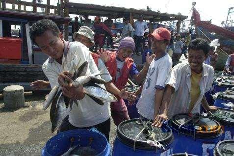 Data Badan Pusat Statistik (BPS) menunjukkan nilai ekspor hasil perikanan Indonesia pada Maret 2020 mencapai US427,71 juta atau meningkat 6,34 persen dibandingkan dengan ekspor Februari 2020.  - Bisnis.com