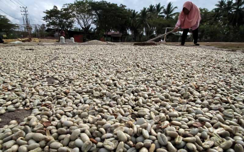 Pekerja menjemur biji kopi Arabika Gayo di lapangan desa, Bandar Baro, Aceh Utara, Aceh, Rabu (11/3/2020). Harga biji kopi Arabika Gayo sejak awal tahun 2020 mengalami penurunan pada kisaran Rp52 ribu per kilogram dari harga sebelumya Rp60 ribu hingga Rp65 ribu per kilogram. ANTARA FOTO - Rahmad