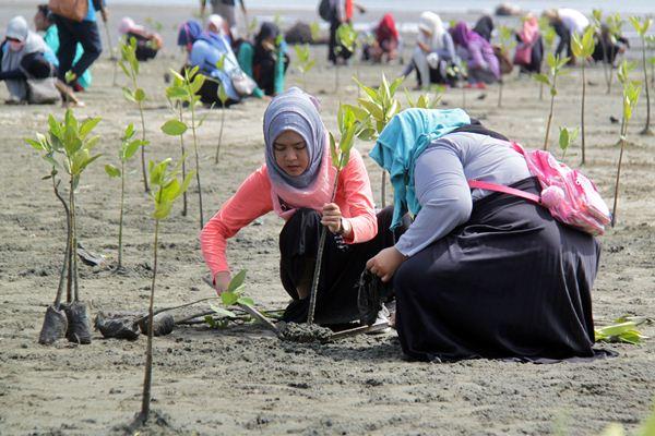 Mahasiswa Universitas Islam Negeri (UIN) Aceh bersama Walhi menanam ribuan bibit mangrove di pantai Ujung Pancu, Kabupaten Aceh Besar, Aceh, Sabtu (22/4). - Antara/Ampelsa