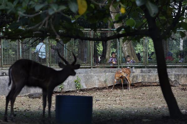 Kebun Binatang Ragunan dipadati pengunjung saat libur Lebaran - Antara