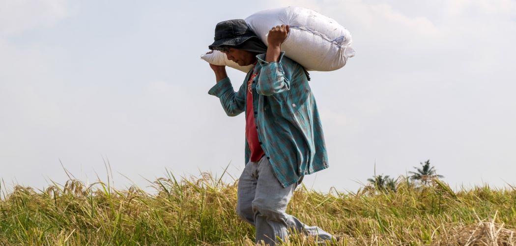 Ilustrasi - Buruh tani mengangkut hasil panen. - Bloomberg / Veejay Villafranca