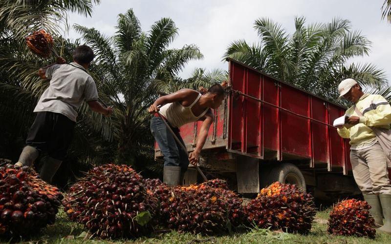 Pekerja mengangkat buah sawit yang dipanen di Kisaran, Sumatera Utara, Indonesia. - Dimas Ardian / Bloomberg