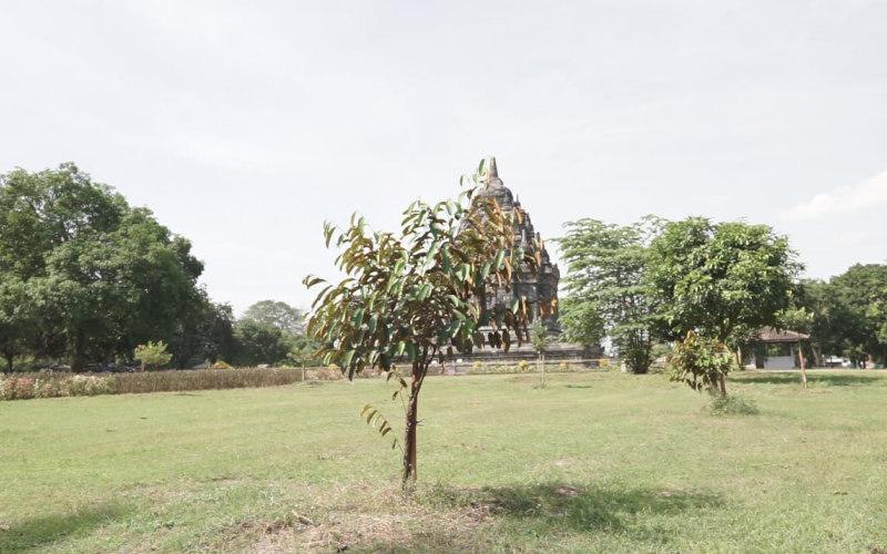 Salah satu pohon yang ditanam Darling Squad - Istimewa