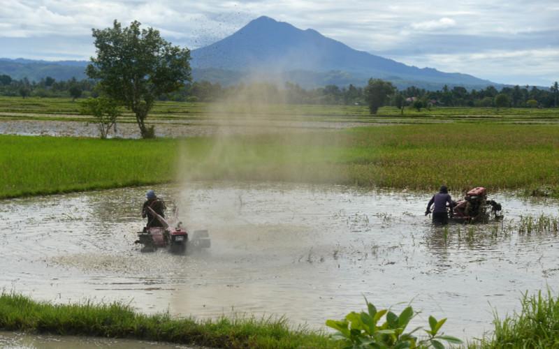 Ilustrasi petani membajak sawah menggunakan traktor tangan. - Antara