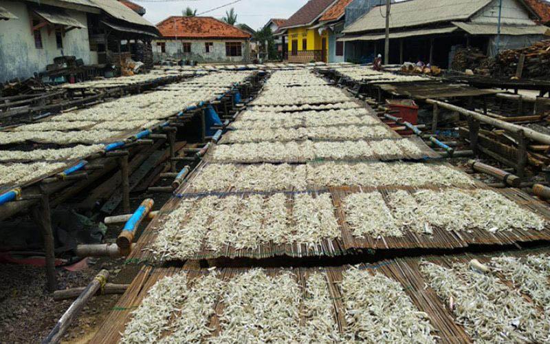 Penjemuran ikan teri asin di Pulau Pasaran, Kota Bandar Lampung, Provinsi Lampung, yang merupakan salah satu sentra perekonomian warga daertah tersebut./Antara - Dian Hadiatna