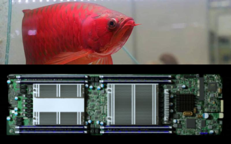 Ikan Arwana, dan Microchip yang diperbesar. - Kemenko Marves/Bloomberg