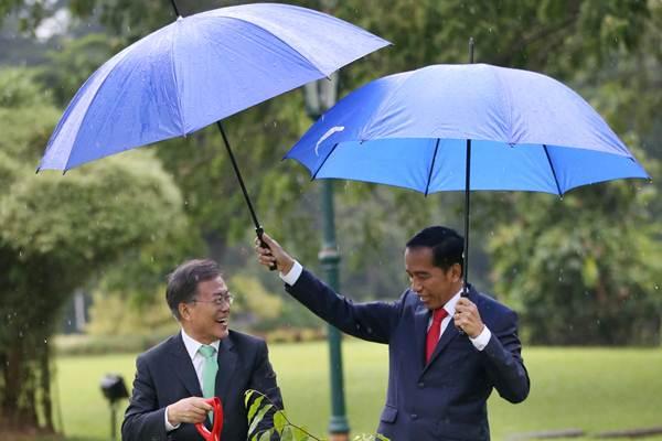 Presiden Joko Widodo (kanan) memayungi Presiden Korea Selatan (Korsel) Moon Jae-in saat menanam pohon Gaharu di halaman belakang Istana Kepresidenan Bogor, Jawa Barat, Kamis (9/11). - Reuters