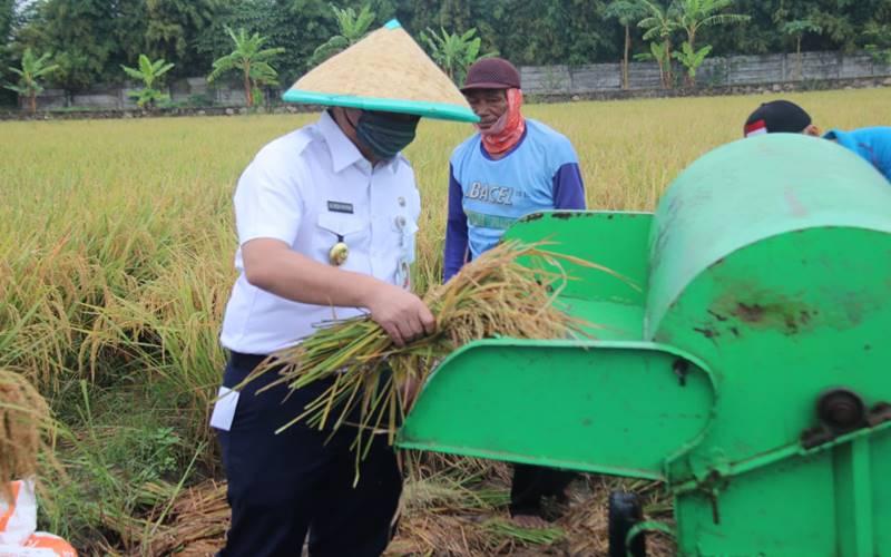 wagub DKI Jakarta Ahmad Riza Patria ikut dalam panen beras di lahan Sawah Abadi, Ujung Menteng, Cakung, Jakarta Timur pada Rabu (15/7/2020). - Istimewa