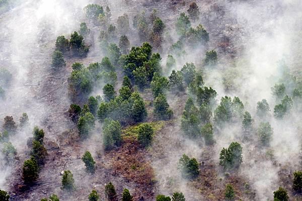 Asap mengepul dari kebakaran lahan gambut di Kecamatan Tanah Putih Kabupaten Rokan Hilir, Provinsi Riau, Selasa (21/2). - Antara/FB Anggoro