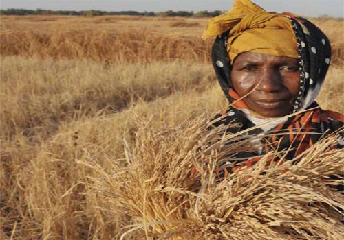 Organisasi Pangan dan Pertanian Dunia (FAO) mengidentifikasi 27 negara terancam mengalami krisis pangan karena pandemi Covid-19 -  FAO