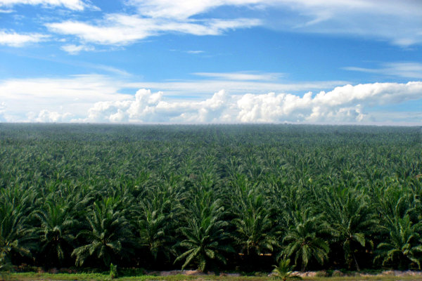 AGRO SGRO Harga CPO Naik, Sampoerna Agro (AGRO) Kaji Revisi Target Produksi - Market Bisnis.com