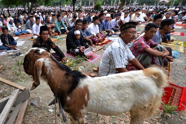 Seekor kambing kurban berada di antara umat muslim yang mengikuti salat Iduladha di halaman Masjid Agung Darussalam Palu, Senin (12/9). - Antara