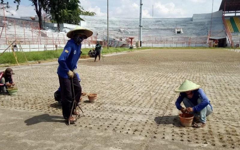 Proses pengerjaan penanaman rumput Stadion Gelora 10 November - Antara
