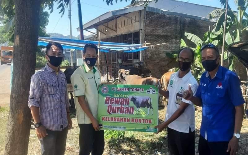PT. Semen Tonasa menyerahkan bantuan sapi kurban secara simbolis kepada perwakilan kelurahan Bontoa Pangkep - Istimewa