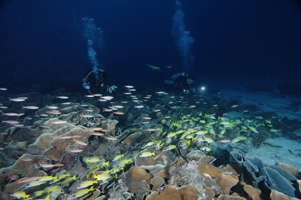 Terumbu karang di Teluk Cenderawasih - Indonesia Travel