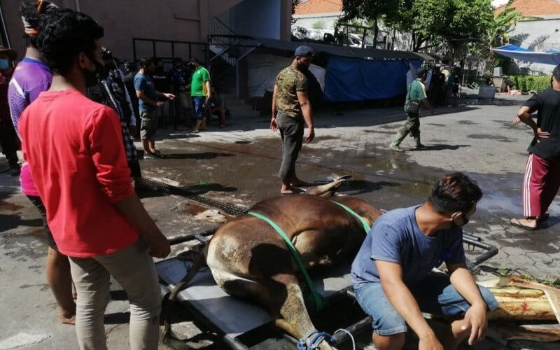 Proses pemotongan daging kurban di Kantor DPW LDII Bali, Jumat (31/7/2020). - Antara/Ayu Khania Pranisitha