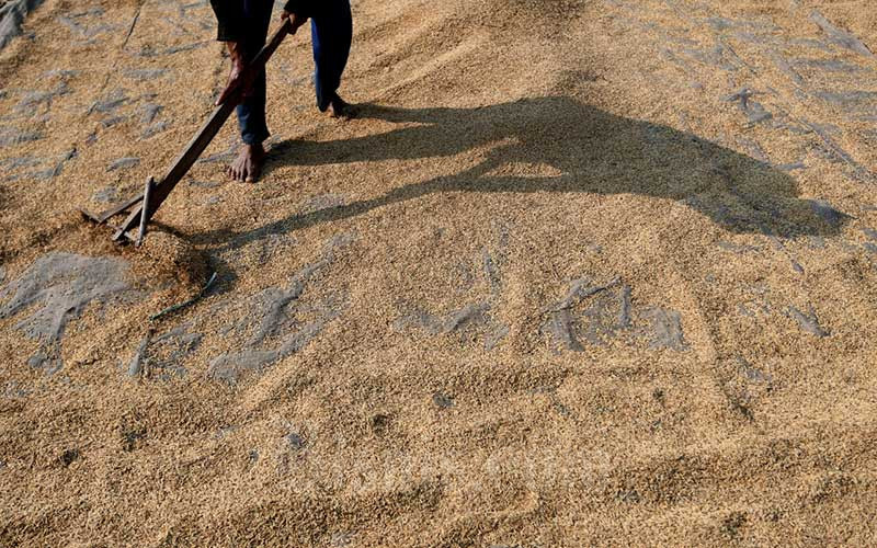 Ilustrasi petani menjemur gabah hasil panen./Bisnis - Abdurachman