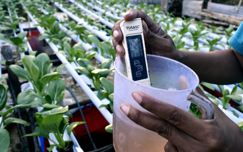 Petani mengukur pH (power of hydrogen) air tanaman sawi yang ditanam dengan sistem hidroponik. Budi daya tanaman dengan sistem hidroponik menjadi alternatif bagi petani dengan lahan sempit dengan masa tanam hingga panen yang relatif lebih cepat dengan harga jual yang lebih tinggi dibanding dengan sistem tanam konvensional.  - ANTARA