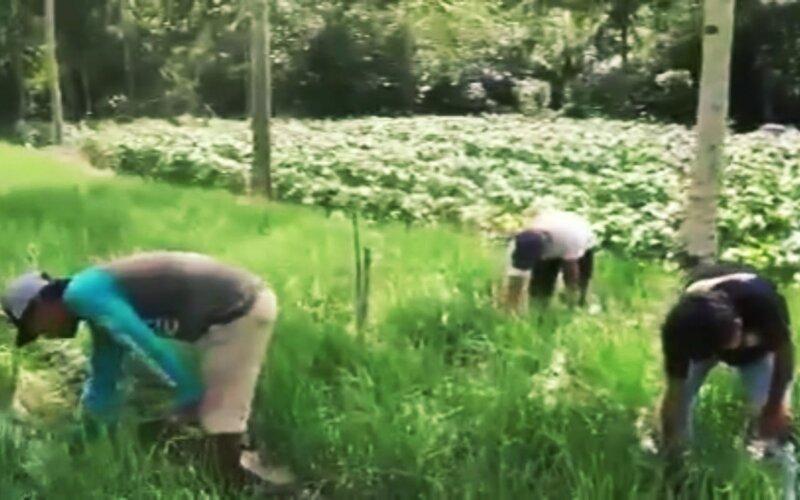 Petani di Kab. Blitar antusias menanam tanaman holtikultura dengan adanya pasokan air, seperti dari sumur dalam.