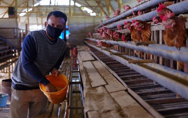 Darmadi, ketua kelompok ternak ayam petelur Telaga Agung, Desa Temandang, Tuban yang tergabung dalam klaster unggas binaan SIG.