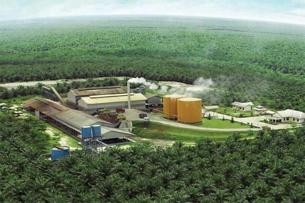 BWPT Eagle High Plantations (BWPT) Tunda Ekspansi Bangun Pabrik di Kaltim - Market Bisnis.com