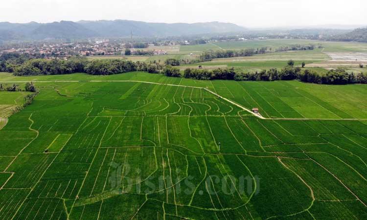 Foto aerial lahan persawahan di Banyumas, Jawa Tengah, Minggu (23/2/2020). Bisnis - Himawan L. Nugraha