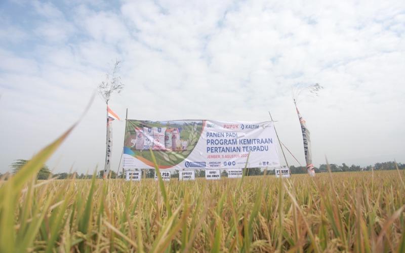 Pupuk Kaltim mengembangkan Program Kemitraaan Pertanian Terpadu (PKPT) sebagai upaya menggerakkan sumber daya sektor pertanian sekaligus mendorong kemandirian petani yang lebih berdaya saing. - JIBI/Istimewa